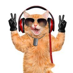 Foto Humor Tiere Katze Kopfhörer Fuchsrot Brille Lustige Weißer hintergrund