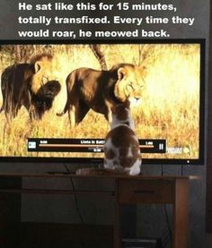 Awww,he wants to be a lion