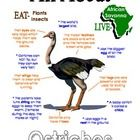 """This """"All About Book"""" will be a fun addition to your classroom and lesson on the ostrich. (African Animals Unit Study)  Your student/child will love to learn """"All About Ostriches""""!"""