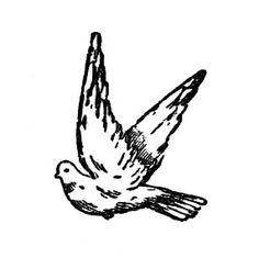 Dove Bird - Curious Clipart - Vintage Clip Art Black and White Illustration