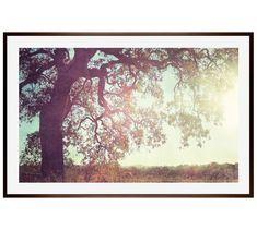 Sunny Oak Framed Print by Lupen Grainne | Pottery Barn