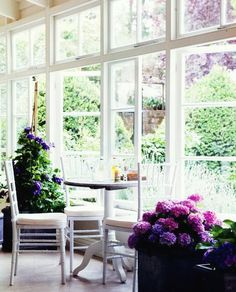 windows & gorgeous hydrangeas