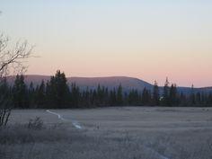 2012 Aamu nousee Moloslehdon porokämpällä.