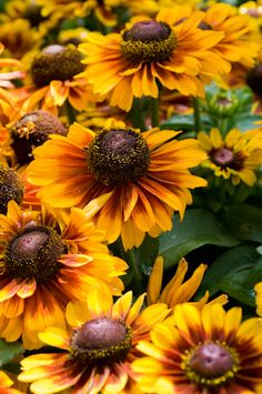 How to Plant a Sunflower House by bringblessing: A perfect secret summer hide-a-way the kids can help plant and grow with just a couple of packets of sunflower seeds of different heights, a sunny spot and water! Happy Flowers, Fall Flowers, Beautiful Flowers, Sun Flowers, Yellow Flowers, Sunflowers And Daisies, Black Eyed Susan, Mellow Yellow, Fall Halloween