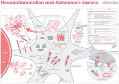 Neuroinflammation and Alzheimer's disease poster Biology Art, Degenerative Disease, Anatomy And Physiology, Alzheimers, Neuroscience, Disorders, Learning, Poster, Studying