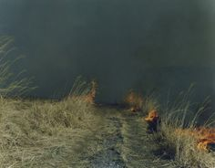 """Rinko Kawauchi, Untitled, from the series """"Ametsuchi"""" (2012)"""