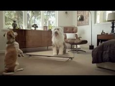 Funny cats and dogs video watching LG 4K TV -  #animals #animal #pet #cat #cats #cute #pets #animales #tagsforlikes #catlover #funnycats Funny cats and dogs video watching LG 4K TV. With 4X the resolution, even animals can't tell the difference watching a LG 4K TV. How do your pets react to TV?  - #Cats