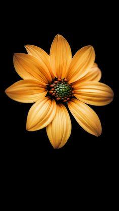 ideas photography ideen blumen for 2019 Fall Flowers, Exotic Flowers, My Flower, Pretty Flowers, Flower Art, Golden Flower, Flower Phone Wallpaper, Beautiful Flowers Wallpapers, Sunflower Wallpaper