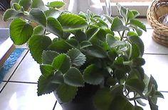 image Plant Leaves, Plants, Image, Plant, Planets