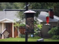 ▶ Best Squirrel Proof Bird Feeder Pole and Baffle System - YouTube