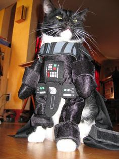 Darth Vader costume for cats...lol :)