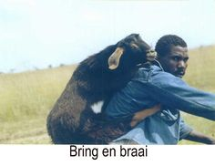 Here is our funny freight picture of the day - getting logistics right is important! Funny Images, Funny Pictures, My Land, Afrikaans, Image Shows, South Africa, Goats, Funny Animals, Transportation