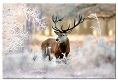 """Obraz na płótnie z jeleniem """"Jeleń na mrozie"""" - bajkowy pejzaż w stylu skandynawskim"""