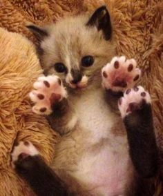 Jelly Beans !! - 13th may 2015