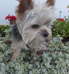 Leo between the flowers