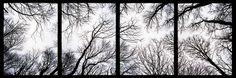 Take Panorama across multiple frames of film