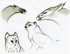 Various Griffins by RobtheDoodler.deviantart.com on @deviantART