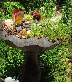 Old Bird Bath turned into a Succulent planter