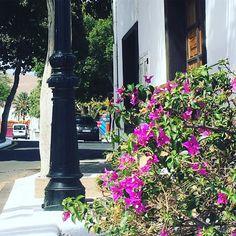 Yaiza Kanaren - Lanzarote #spain #kanaren #canarias #palmen #lanzarote #futeventura #instatraveling #instagram #picture #jameosdelagua #jameosdelagualanzarote #palmtrees #cesarmanrique #cactus #yaiza