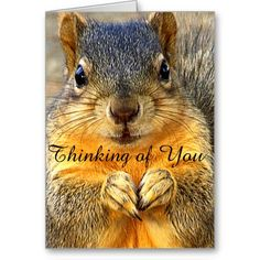 """Thinking of You_ Greeting Cards Close up of a cute squirrel wanting to let you know he/she is """"Thinking of You"""". art by Elenne Boothe http://www.zazzle.com/thinking_of_you_greeting_cards-137727579358109285 #Greeting Cards # Squirrels #Cards #Thinkin of You #Zazzle #Zazzle.Com/Elenne # Occasions Cards #Rodents #Animals"""
