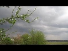 Медитация на Весенний Дождь. Релакс (Peace. Relax. Rain. Thunder)