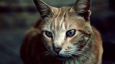 Nuestros queridos gatos de pueblo