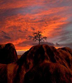 peter holmeiii photography - Google keresés