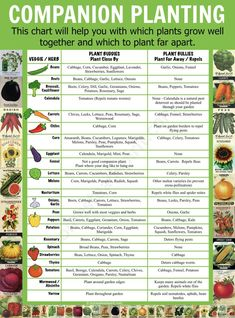 Companion Planting Chart Lots Of Great Info Video Tutorial Source by Our Reader Score[Total: 0 Average: Related photos:How to Build Raised Garden Beds - Some gardeners prefer traditional gardening, .Build a Raised Garden Vegetable Bed