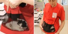 They're called Kitten Bjorns. Special pouches help feral kittens get used to humans at shelters ❤
