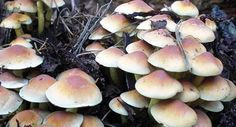 Edible and Non-edible Mushrooms you Find in Forests | Ask a Prepper