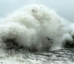 Google Image Result for http://tomorrowstarted.com/wp-content/uploads/2011/08/awsome-amazing-wicked-wave-surf-wipe-out-480x415.jpg