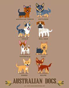 Australian dogs (c) Lili Chin @ doggiedrawings.net