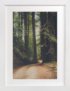 Walk Into the Woods by Bente Jorgensen-Barajas at minted.com