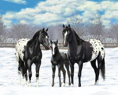 Black Horse Art Print featuring the painting Black Appaloosa Horses In Winter Pasture by Crista Forest
