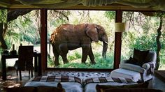 South Africa - Imagine seeing an elephant walk past your hotel window