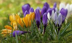 Free Image on Pixabay - Crocus, Flower, Spring Flower Free Pictures, Free Images, White Flowers, Beautiful Flowers, Watercolour Painting, Spring Flowers, Planting Flowers, Landscape, Nature