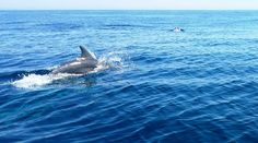 Morning group of dolphins escorting our boat to an uninhabited island!  http://www.facebook.com/backpackersmaldives  #morning #Maldives #happy #DolphinsDaily #Dolphins #IndianOCean #backpacker #holidays