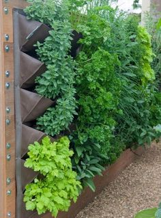 Indoor Vegetable Gardening Vetical Gardens A upright yard can be developed inexpensively with yard netting and also a few of your preferred climbing plants. Do It Yourself Projects - Create a Do It Yourself Outdoor Living Wall Vertical Garden Planter Budget Garden, Diy Garden, Vertical Garden Planters, Plants, Vegetable Garden Trellis, Small Vegetable Gardens, Urban Garden, Vertical Vegetable Gardens, Outdoor Gardens