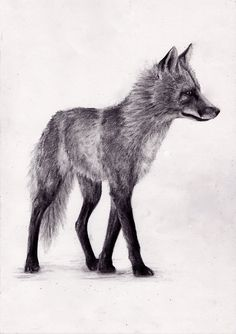 tumblr sketches animals - Google Search