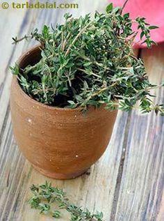 Rosemary Glossary | Recipes with Rosemary | Tarladalal.com