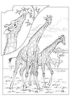 This Giraffe Is A Free Image For You To Print Out Check Our Printable Coloring Book Today And Get Customizing