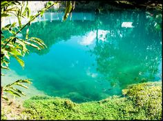 9 mai 2020 - Logement entier à 254 CHF. Blue Hole, Jamaica, Aquarium, River, Goldfish Bowl, Negril Jamaica, Fish Tank, Aquarius, Rivers