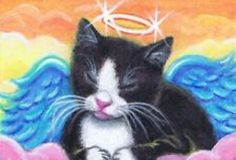 Angel kitten sleeping |Pinned from PinTo for iPad|