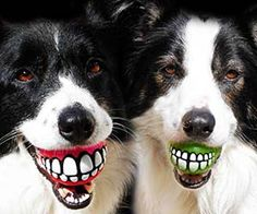 Grinning Teeth Dog Toy Give your furry friend an amusing and comical expression when you play a game of fetch using the grinning teeth dog toy. This novelty toy contains a set of big pearly whites that give the illusion your pet has learned to smile just like people. Check it out $9.14