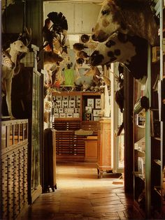 "What I wouldn't give for a day rifling through drawers & boxes in this shop. ""The Last Taxidermist in Paris, Deyrolle, World of Interiors, January 1985"""