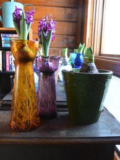 Hyacinth vases - Red Dirt Ramblings®