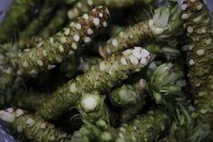Wasabi plants take 18 months to produce rhizomes used by local restaurants. Photo: Lea Suzuki, The Chronicle