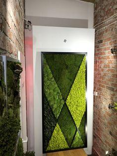Moss wall, preserved moss.