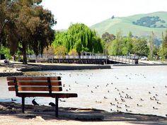 lake elizabeth, Fremont, CA California Living, California Love, Fremont California, Union City, Run Around, Ocean Waves, Bay Area, Wander, Skyscraper