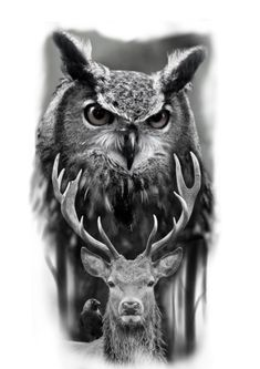 - You are in the right place about (notitle) Tattoo Design And Style Galleries On The Net – Are The - Owl Tattoo Design, Tattoo Designs, Wald Tattoo, Realistic Owl Tattoo, Buho Tattoo, Tier Fotos, Lower Back Tattoos, Tattoo Drawings, New Tattoos